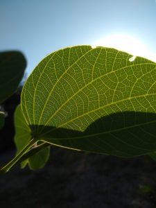 Plant Abundance